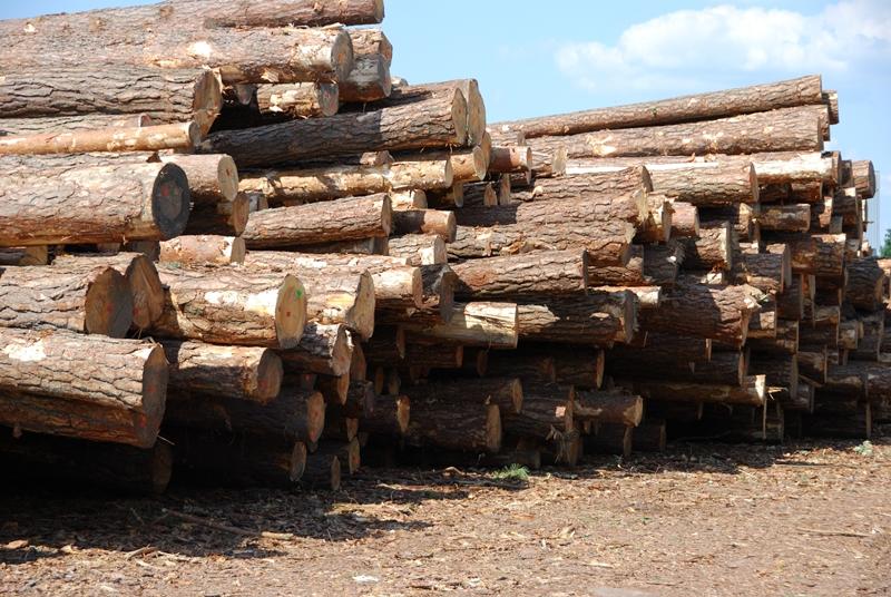 skład drewna - Drewtrans