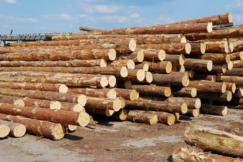 drewno sosnowe - drewtrans